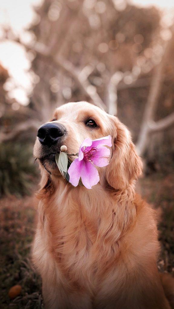 Chien-avec-fleur