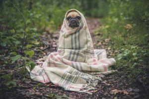 Comprendre le comportement de votre chien à la maison.